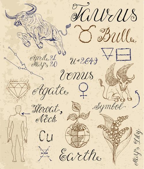 Taurus or Bull zodiac sign vector