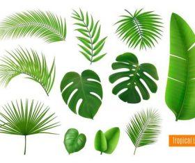 Tropical leaves vector