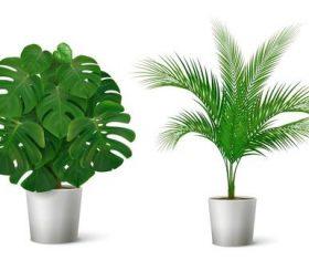 Tropical plant vector
