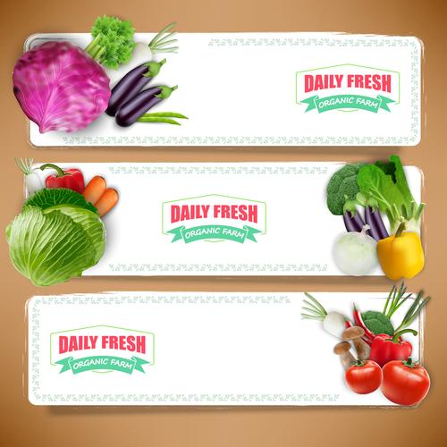 Vegetable banner vector