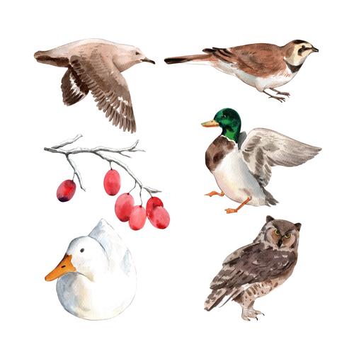 Bird watercolor illustration vector