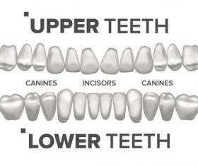 Tooth contrast vector